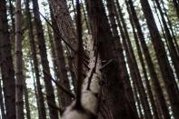 looking up a fallen tree 2
